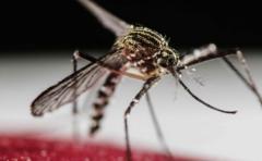 La herramienta que buscará combatir el Aedes Aegypti