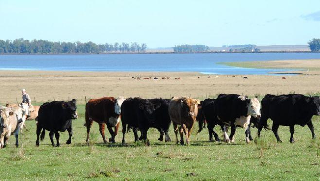 """Invertir en ganadería """"es seguro y rentable"""""""