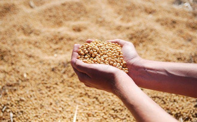 Plan quinquenal del INASE trabajará en el fortalecimiento institucional, los servicios, y la calidad de semillas