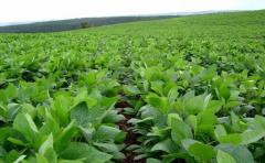"""Argentina: los cambios en las políticas agropecuarias """"favorecen las inversiones agrícolas"""""""