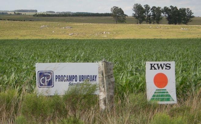 Procampo: 27 años innovando en la agricultura