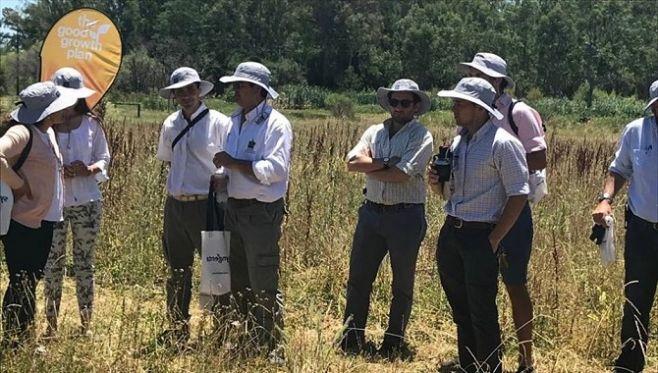 La importancia de los polinizadores en el ecosistema agrícola