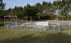 """""""Tecnología, manejo y bienestar animal�, ejes para el rubro ovino"""