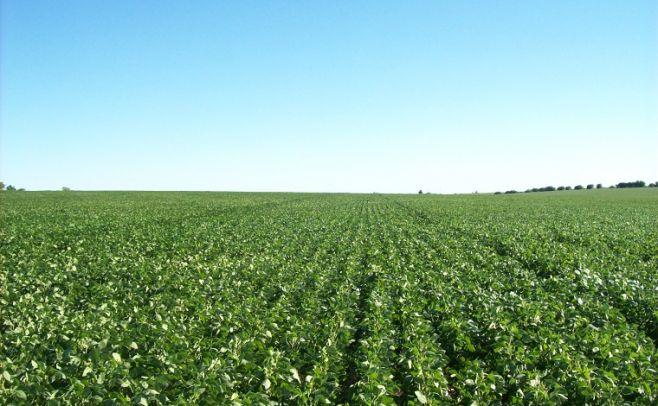 Se aprobaron cuatro OGMs en soja y maíz