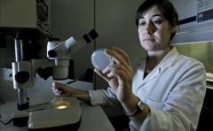 Descubren cómo las bacterias se hacen resistentes a los antibióticos
