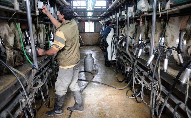 """Productores de leche """"evitan"""" invertir por incertidumbres del sector"""
