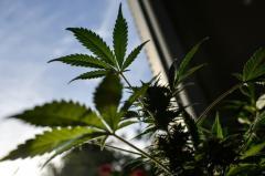 Uruguay consolidado como referente en la legalización de la marihuana