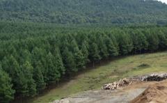 El sector forestal avanza en la cadena productiva nacional