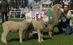 """Con buenas perspectivas para la carne y la lana, el Corriedale """"hace la diferencia"""""""