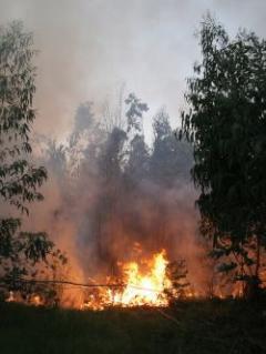Gobierno pidió extremar cuidados ante riesgo de incendios forestales