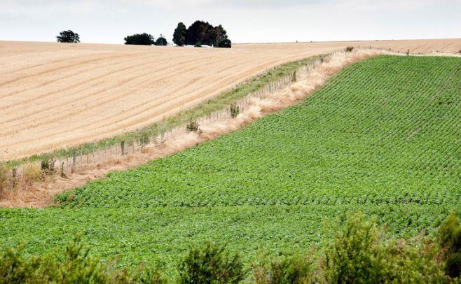 """Productores agropecuarios reclaman """"medidas reales"""" para el sector"""