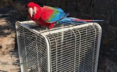Animales incautados en casa de Balcedo van al bioparque Durazno y al parque Lecocq
