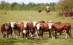 ACG respalda movilización de productores