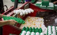 Bélgica destruyó en total 77 millones de huevos por la crisis del fipronil
