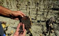 Uruguay asume nueva etapa al frente de programa agro sobre cambio climático