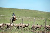 """Manifestación de productores """"no beneficia"""" a los peones rurales"""