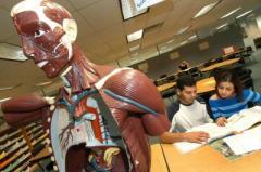 Científicos descubren un nuevo órgano en el cuerpo humano