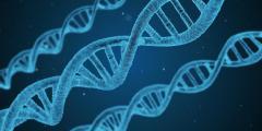 Síndrome metabólico puede ser diagnosticado tempranamente a través del ADN