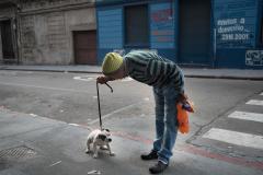 Más de 10.000 perros serán castrados gratuitamente en Montevideo