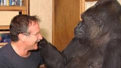 La gorila inteligente Koko muere a la edad de 46 años en EEUU