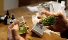 Creció la cantidad de personas que usa cannabis medicinal por enfermedades crónicas o prevención