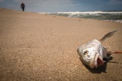Cese de alerta de marea roja en Maldonado y Rocha