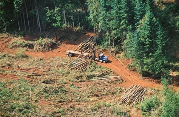 Las áreas protegidas en Brasil están bajo amenaza, alertan investigadores