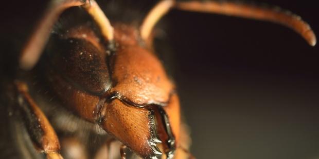 Las peores picaduras de insectos del mundo