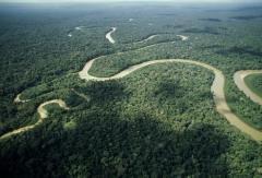 """El CO2 liberado por """"El Niño"""" en el Amazonas fue 4 veces peor de lo previsto"""