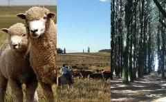 """F. Pereira: """"La diversidad es la clave en el agronegocio"""""""