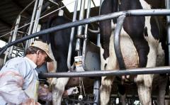 """""""Día de duelo para la lechería nacional"""""""