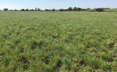 Prolesa prevé una mayor demanda de semillas para verdeos y pasturas