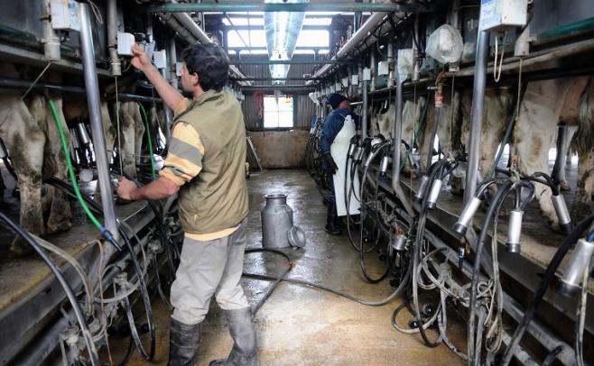 Productores lecheros convocan a asamblea por seria posibilidad de dejar la actividad
