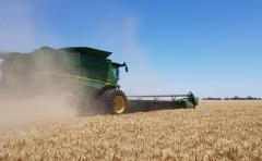 Contratistas buscan estrategia en las chacras, pero priorizan en la cosecha