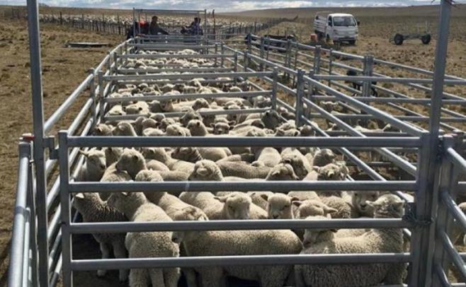 En febrero desembarcará en Uruguay una misión técnico comercial de México interesada en la carne ovina