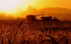 Mientras se sembró más del 70% del área de soja de segunda, la cosecha de trigo alcanza el 90% del área