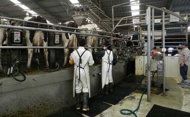 """En el norte """"la ganadería y la lechería se completan"""" con el fin de diversificar"""