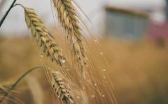 """Agricultura en alerta: en el litoral los 100 milímetros de lluvia por el momento """"no tienen impacto negativo"""""""
