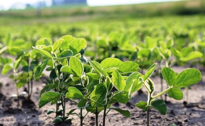 Cultivos: en el litoral del país llovió entre 150 y 250 milímetros