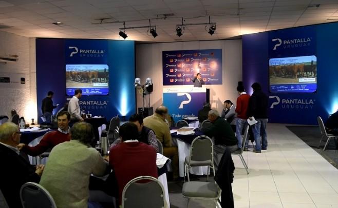 Con ganados de calidad, Pantalla Uruguay cierra el 2018
