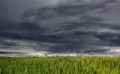 """Perspectivas climáticas: """"El verano tendrá precipitaciones por encima de lo normal"""""""
