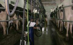 BROU: El 91% de los productores lecheros están al día con sus créditos