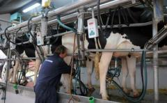 Con reuniones clave este jueves y viernes, los productores lecheros esperan más medidas por parte del gobierno