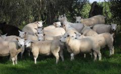 La apertura del mercado de EEUU para la carne marcó un aumento del 20% en el precio