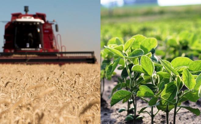 Mientras se termina de sembrar la soja, el trigo y la cebada marcan rindes récord