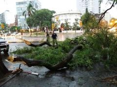 Unas 200 casos de árboles caídos por temporales siguen sin ser atendidos