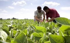 "Las abundantes lluvias ""ponen en riesgo la recta final de la siembra de soja"""