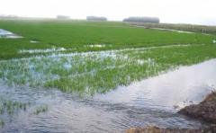 Unas 2.000 hectáreas implantadas de arroz están en riesgo dado las abundantes lluvias