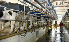 En lo que va de febrero, la remisión de leche cayó un 17%