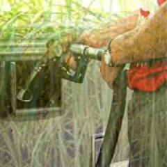 Biocombustibles, ¿un nuevo paradigma, una nueva polémica?